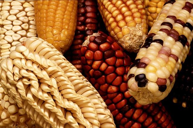 corn-63061_640